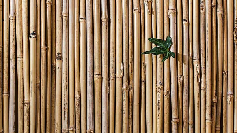 Bamboo fence to hide the AC